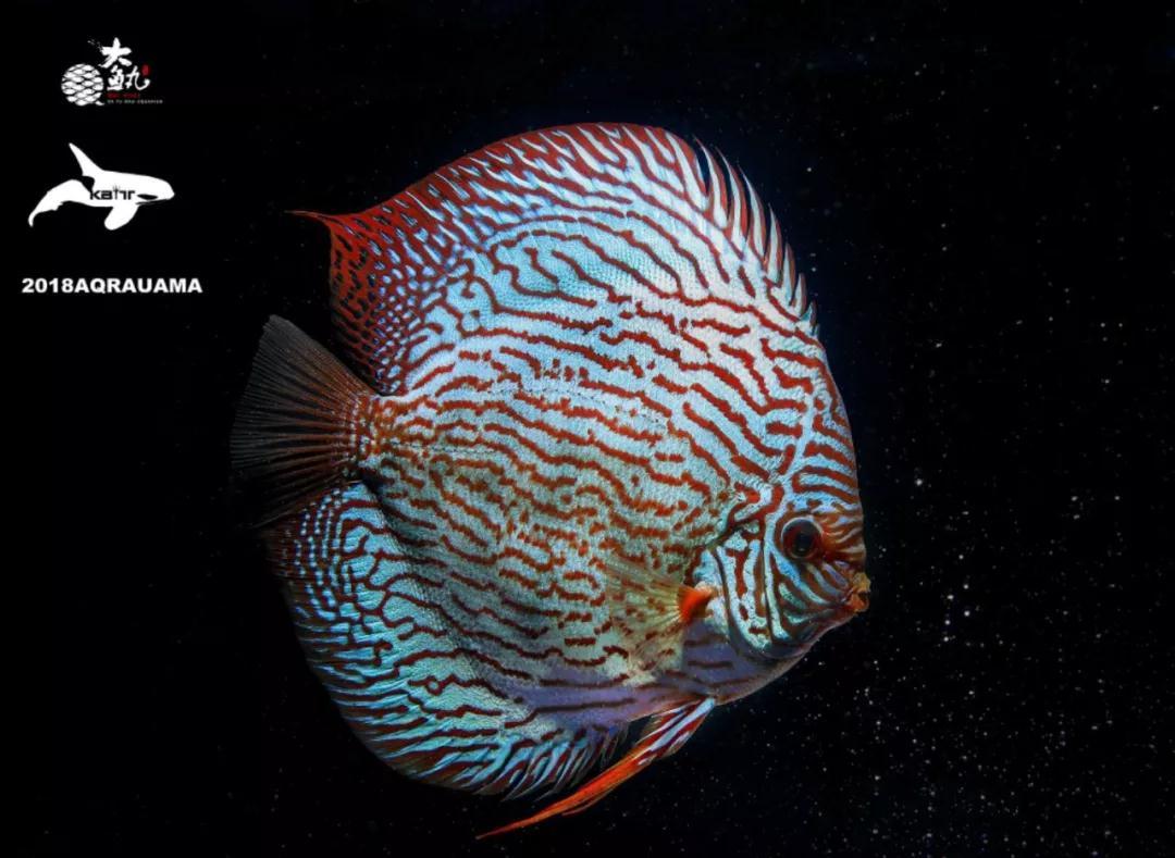 大 怪 三 魚 日本