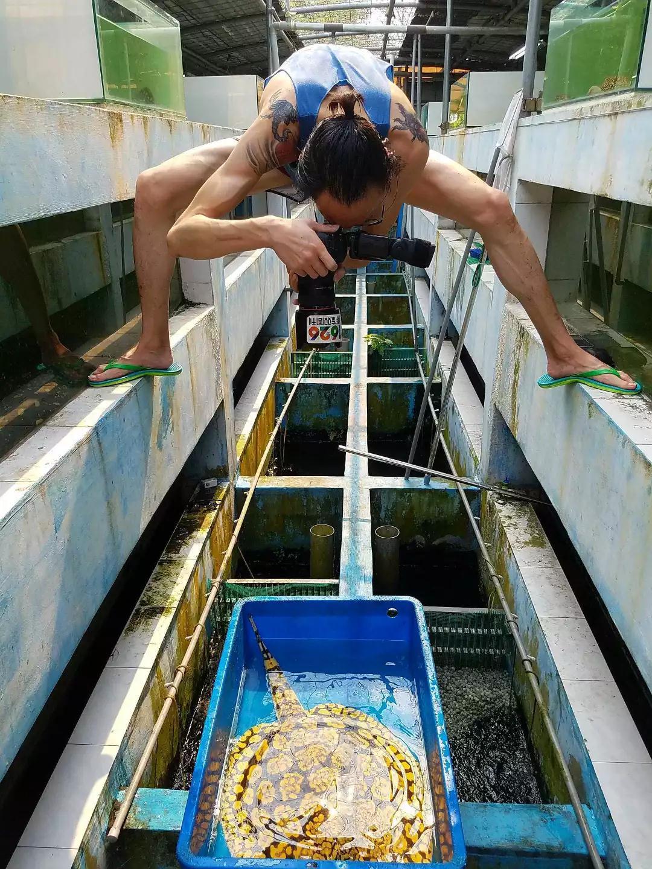 魚 日本 三 大 怪