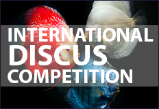 International Discus Competition