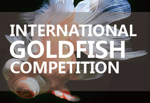 International Goldfish Competition