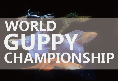 World Guppy Championship